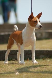 Bassenger Dog 1