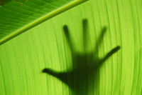 Hand Silhouetted by Leaf