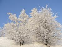 Wild Winter 7