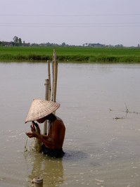 vietnam boy working in water