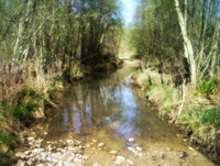 Fairy tale stream