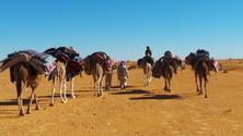sahara beduins 2