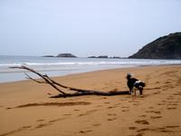 Dog beach
