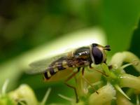 Insecte 12