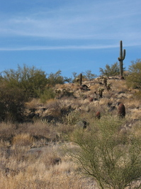 desert scenes 1