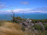 Windswept Coastline