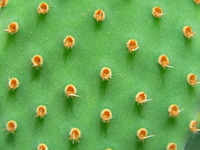 cactus ina different way 4