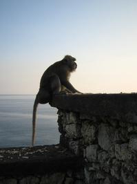 Monkey Cliff