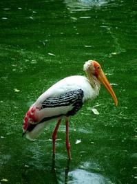 Stork 05