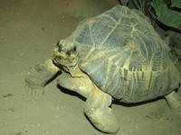 Talking Turtle
