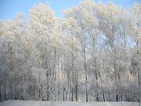 Wild Winter 2