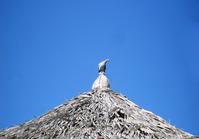 Dove-on-a-Hut