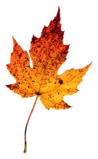 Rough Pastel Leaf 11