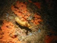 Let's go diving : Hippocampes Divers 2