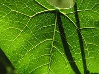 plant_close_up