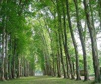 paris.versailles.avenueoftrees