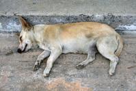 Sleeping Dog Lies