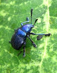 Exotic bug