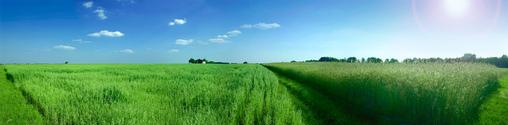 A field near Warsaw, Poland. July 2005