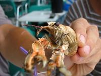Oh, crab! :)