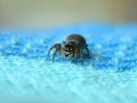 Spider on fabric
