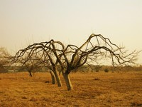 died trees