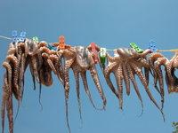 Seafood in Plaka, Agios Nik