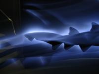 Electric Shark Series 1