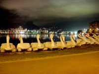 duck lagoa 1