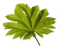Tree Leaves 2