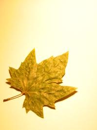 Leafy_Mounts Bay 2