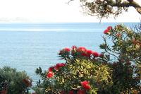 Matarangi Beach 4