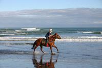 Horse on Beach 2