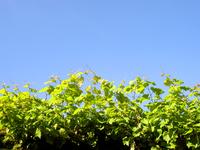 sky/green