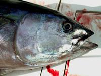 Gomera Deep See Fishing 3