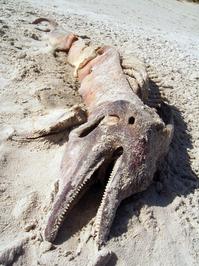 death delphin