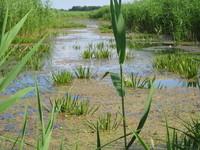 Nemunas Delta