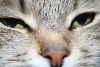 Cat`s face