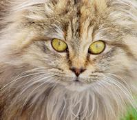 Nellie Closeup