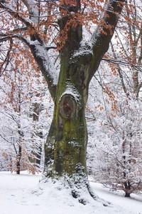 Winter Wonders 1