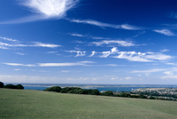 Panorama, green field