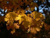autumn0 1
