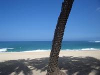 Hawaiian Scenes 7