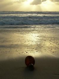 Kelp at sunset 2