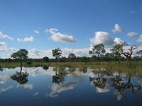 Refflecting trees in Pantanal