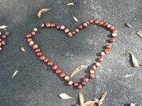 maroon heart 1