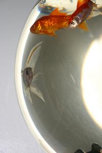 Weird fish view