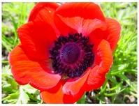 Flower Photo 1