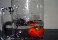 tomato plunge series 3
