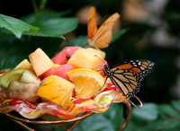 Butterfly and Fruit